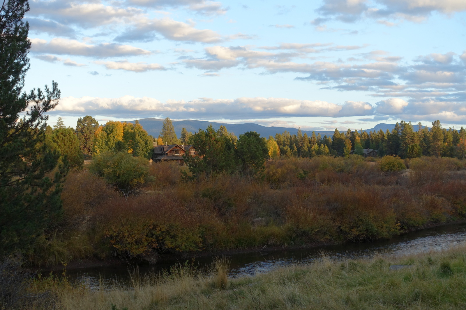 Willows, log house, mountains in evening light